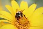 summer-yellow-flower-bee-large