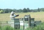 bee keeper 10-15