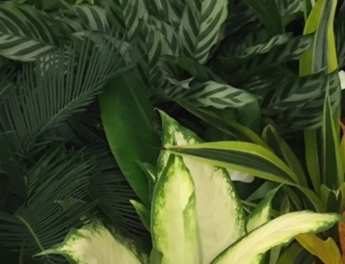 Clearing the Air with Houseplants