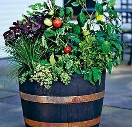 veggie-pot