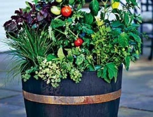 Herbs, Edibles & Successive Planting
