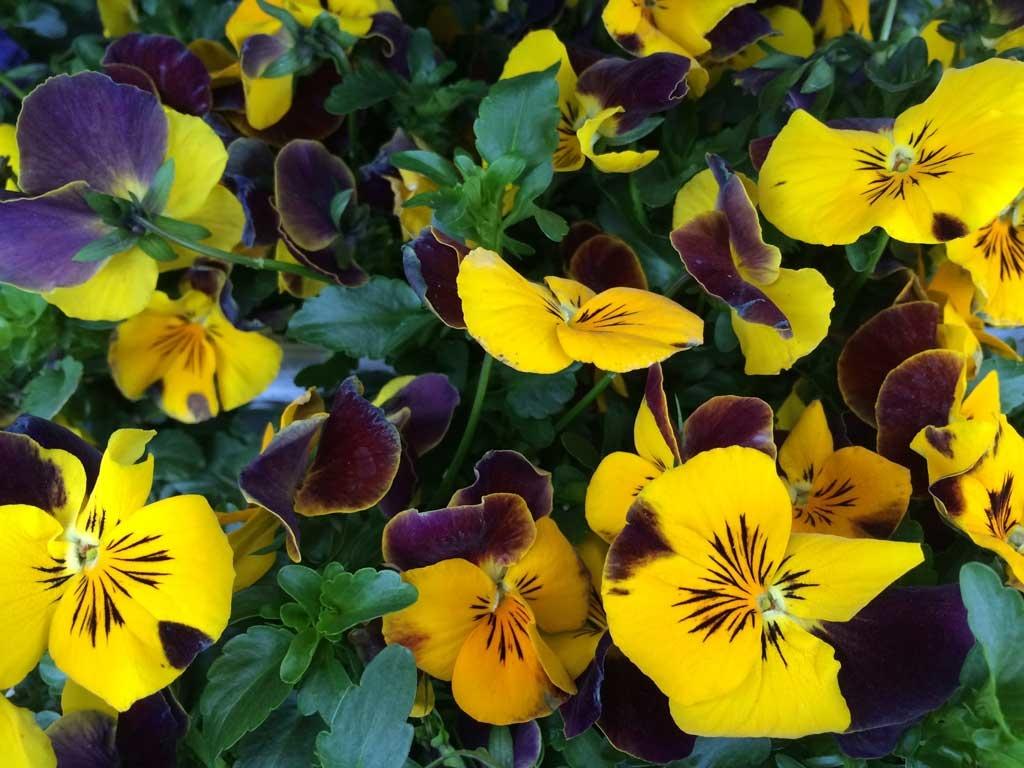 Spring Flowers Have Arrived