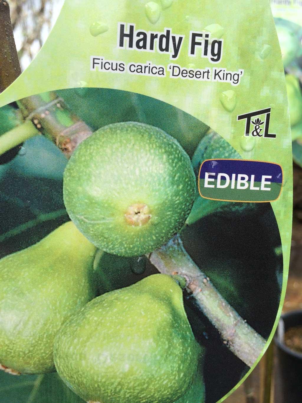 Hardy Fig Edible Shrub