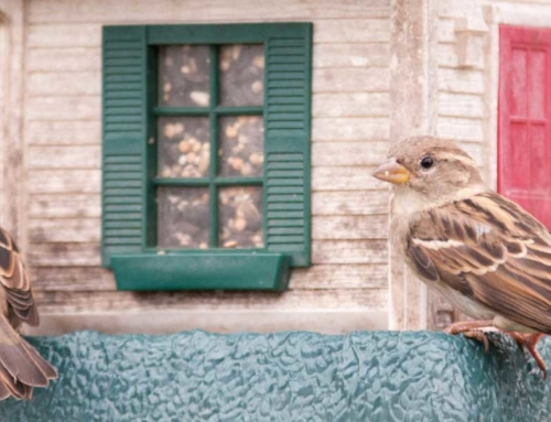 Tips for Keeping Bird Feeders Clean
