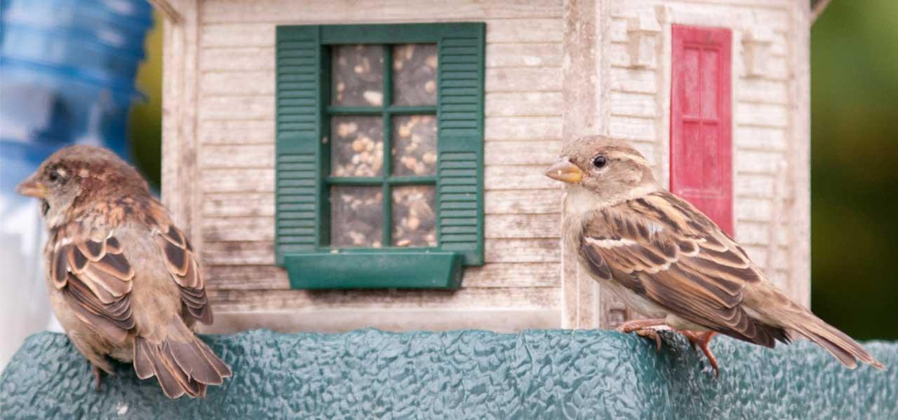 sparrows on birdfeeder
