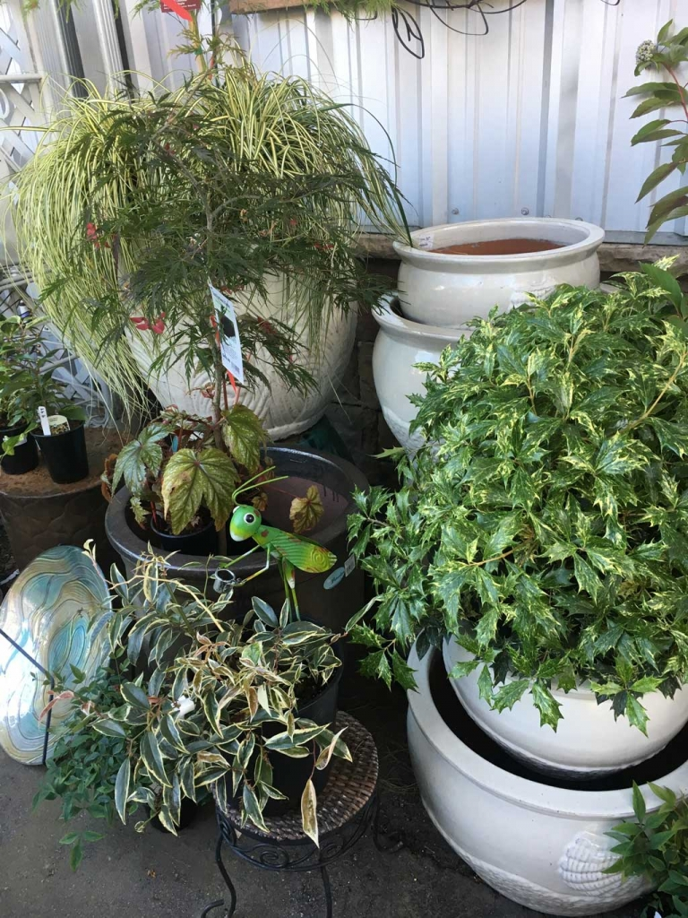 Outdoor Pots On Sale
