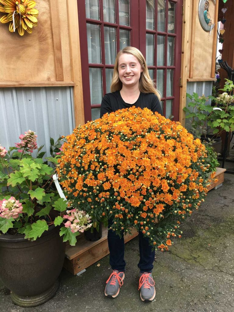 Fall Mums, Asters, and more have arrived