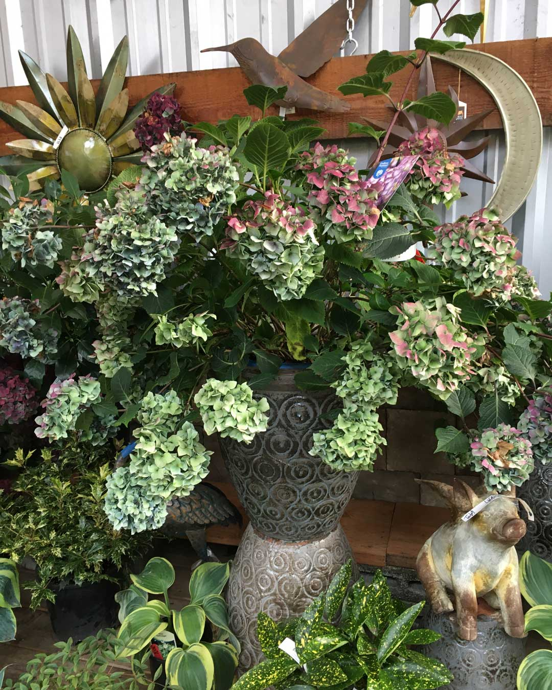 hydrangea garden grouping