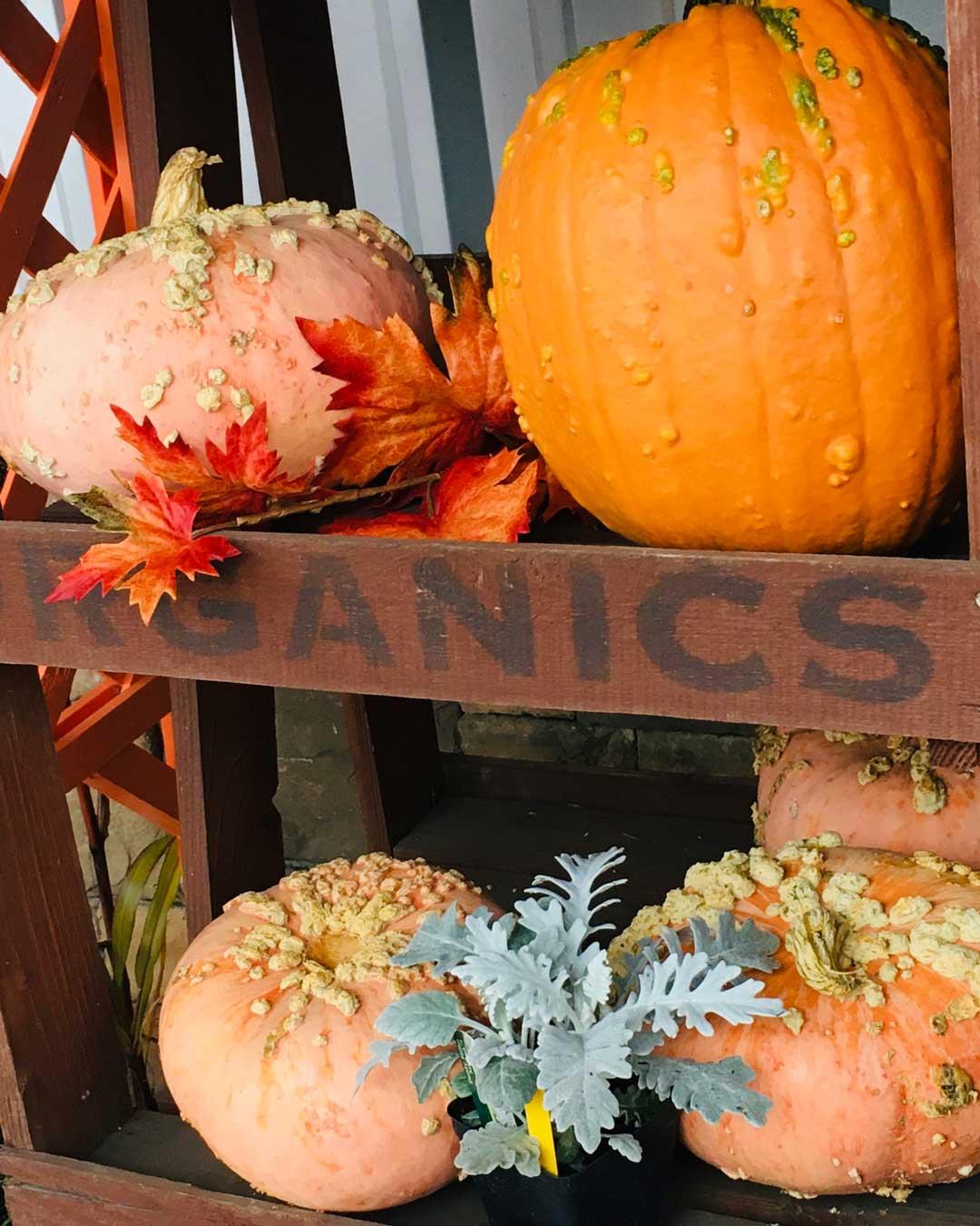 specialty pumpkins