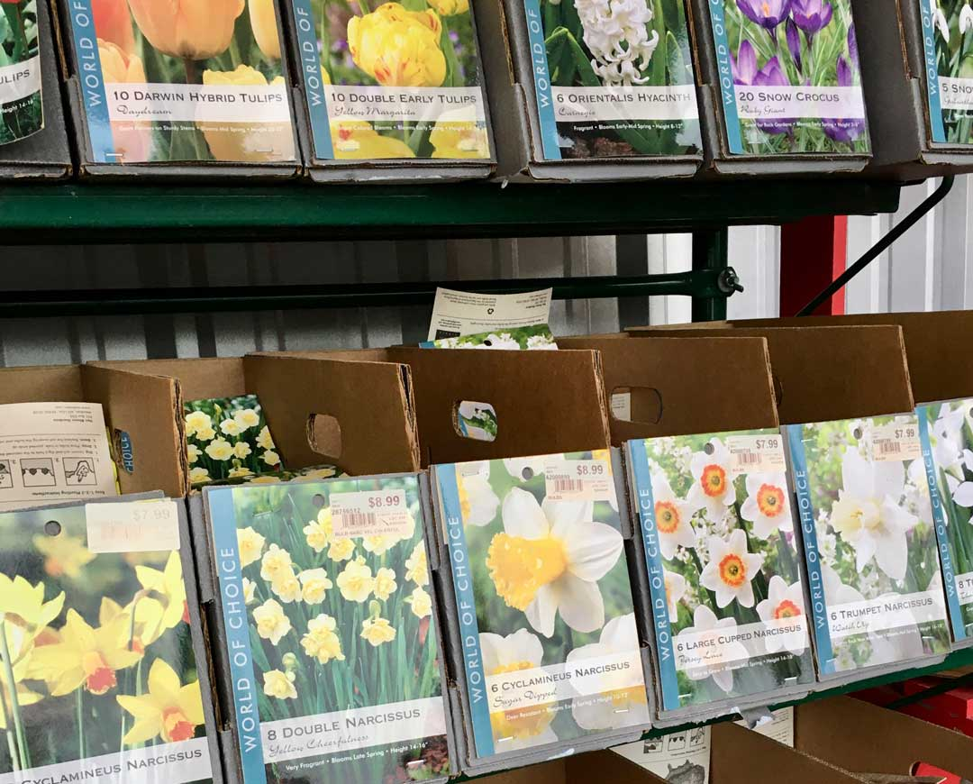 It's time to plant spring bulbs