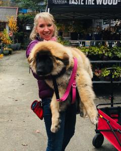 Maizy is 60 lbs!