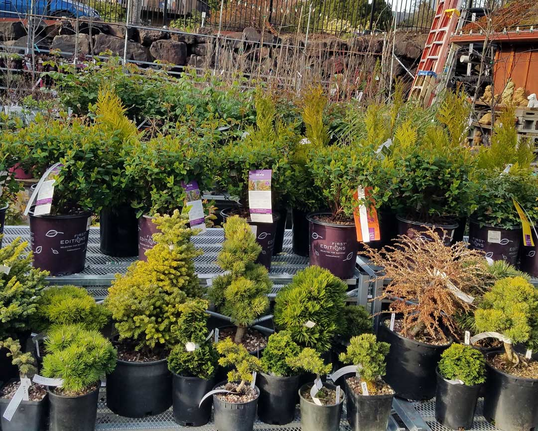 shrubs and dwarf trees
